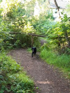 Dog passing through style in woods