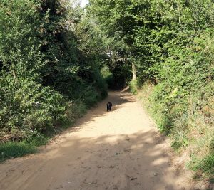 Dog on Sandy Path