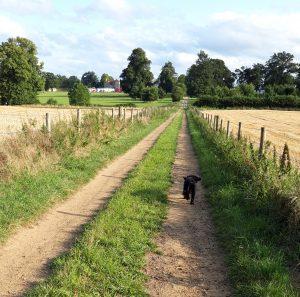 Dog running on track near Loseley Park