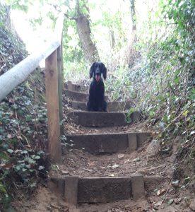 Dog enjoying their Surrey Dog Walk