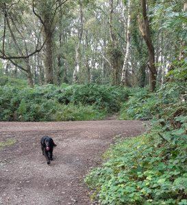 Dog on corner of path at Wood Street