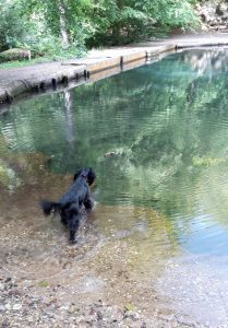 Dog swimming at Wagonners Wells