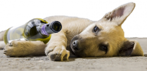 Puppy lying with a bottle of wine