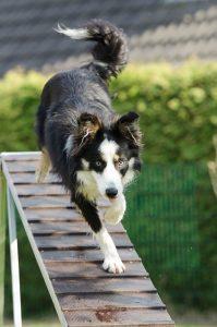 Dog on ramp
