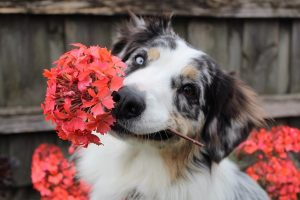 Dog with flower in its mouth