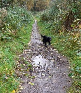 dog near muddy puddle